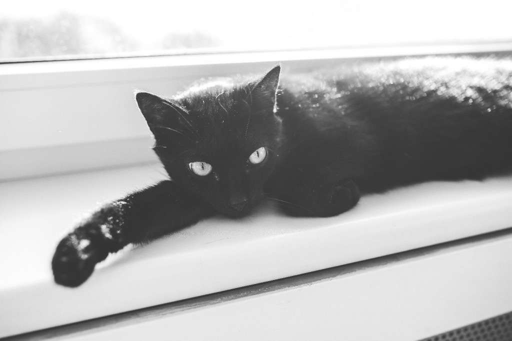 black cat sitting on a window frame indoors instead of outdoor