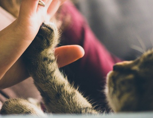 high five! unusual cat names
