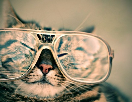 Cat sleeping while wearing large glasses