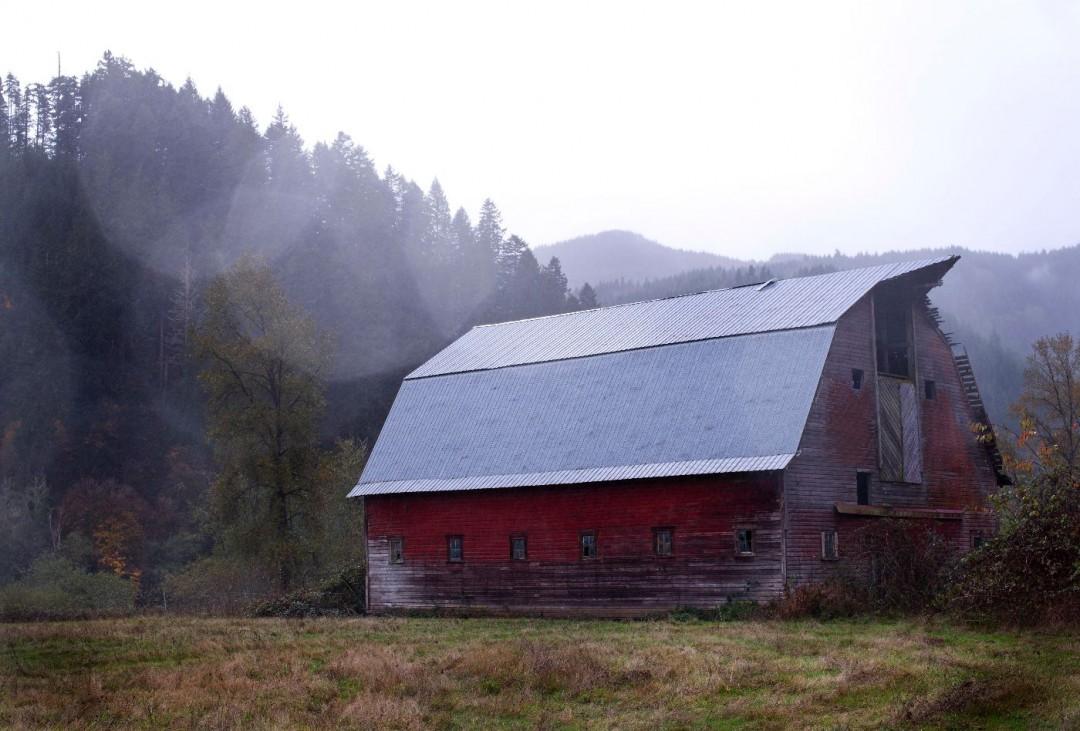 Puppy farming house