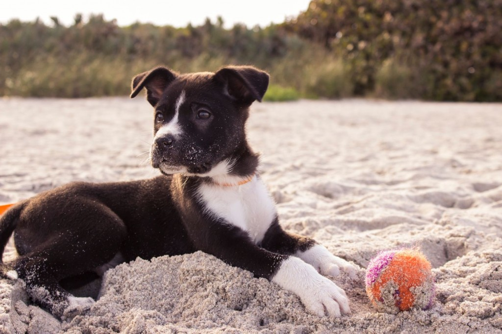 puppy sitting on the sand at the beach