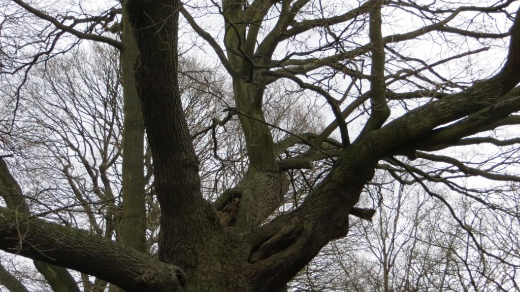 Tree-fork