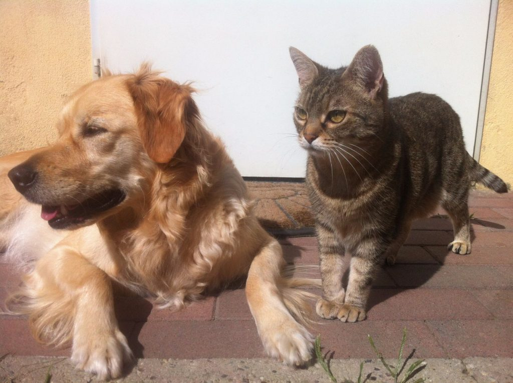 adopting a cat and dog