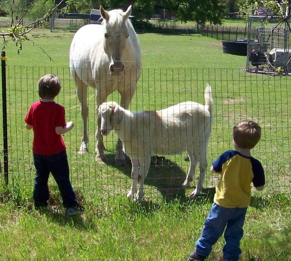 children feeding horse and goat