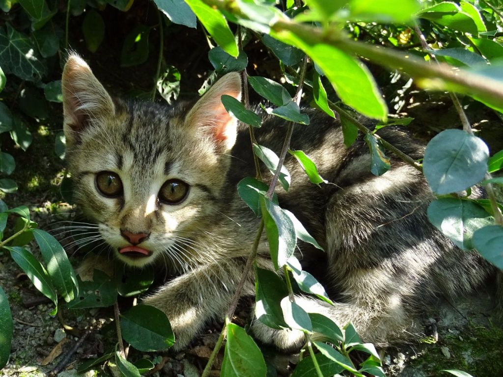 kitten hiding in a bush needs adopting