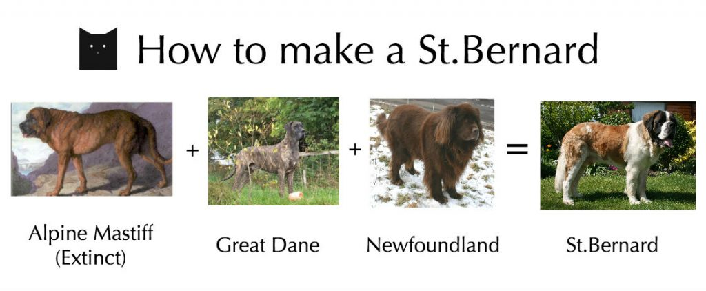 how-to-make-a-st-bernard