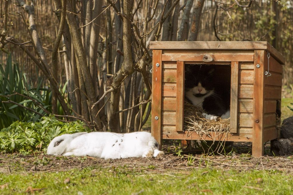 rabbit and cat at animal rescue centre
