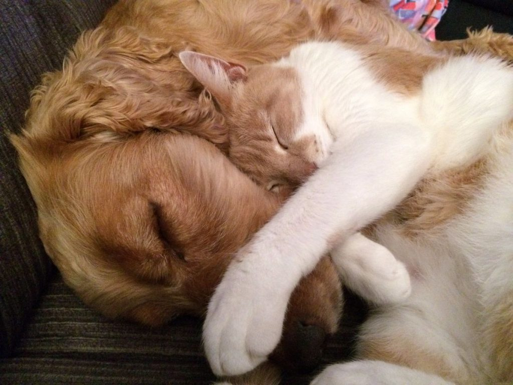 cat and dog napping