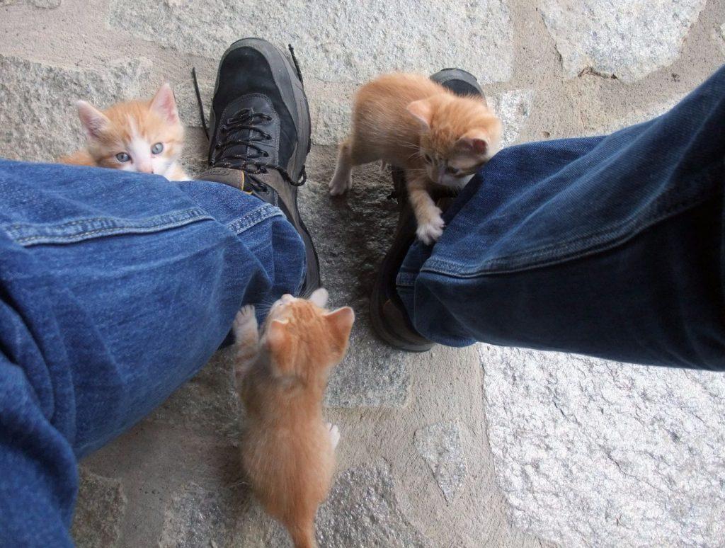 Three kittens playing